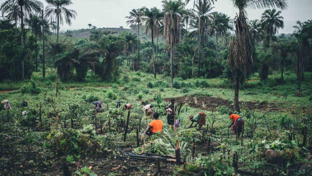 Transafrica-paesi-sierra-leone-campi-verdi