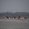 transafrica-articolo-guinea-bissau-nidificazione-tartarughe-fenicotteri