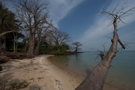 transafrica-articolo-guinea-bissau-nidificazione-tartarughe-spiaggia