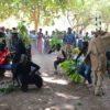 festivals-of-senegal-transafrica-gruppo-danza
