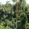 transafrica-articolo-ghana-escursioni-camminate-giungla